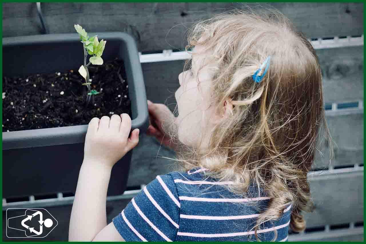 El sprout lápiz es fundamental en educación ambiental, no solo es un lapiz plantable, tambien sirve para enseñar ecologia
