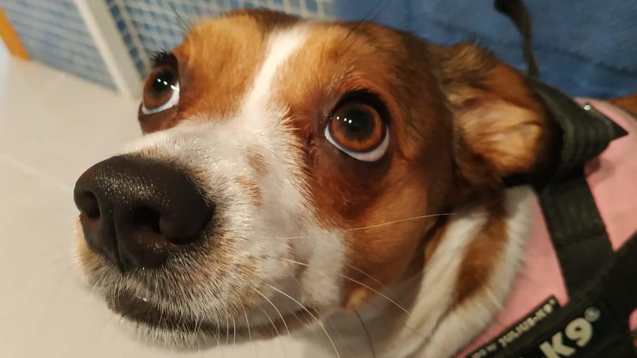 los perros se intoxican con las pastillas para encender el fuego